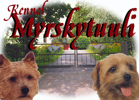 Kennel Myrskytuuli